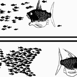 drawing in black and white showing fish swimming